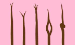 kinds of split ends